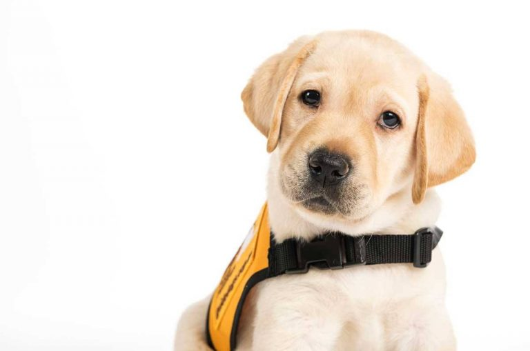 Eastwoods Wealth Management to paws for introductions