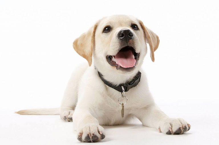New Board positions Guide Dogs SA for the future