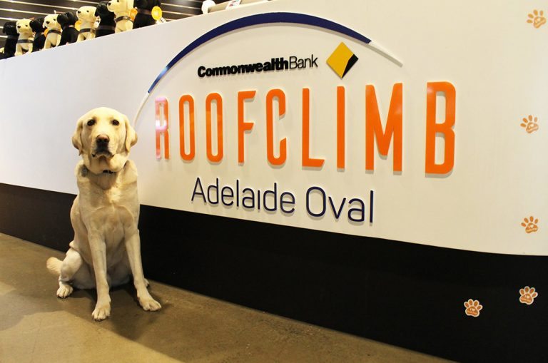 Guide Dogs SA/NT clients take on Adelaide Oval RoofClimb