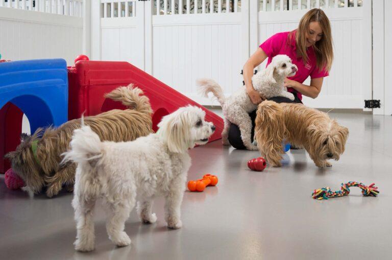 Tips for dog enrichment