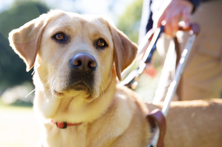 Guide Dogs Australia ranked on the 2019 National Reputation Health Report