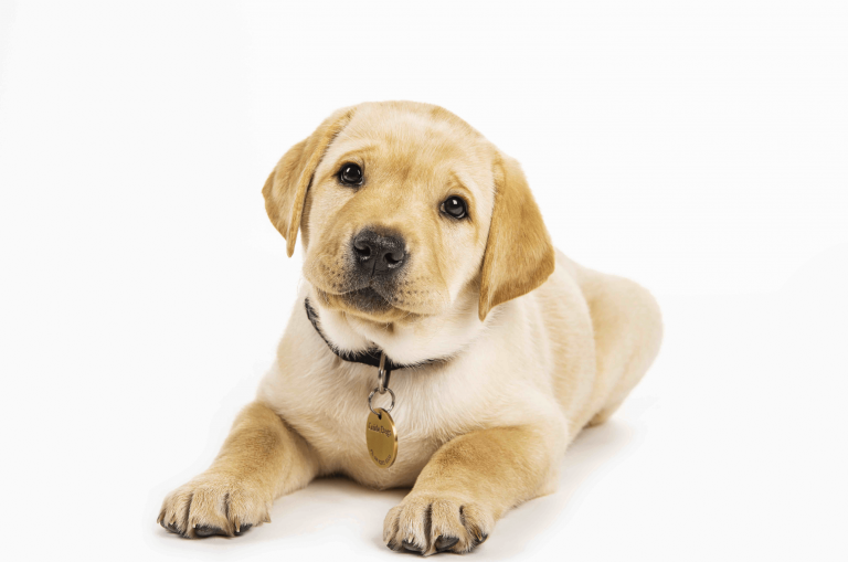 Guide Dogs named Australia's Most Trusted Charity