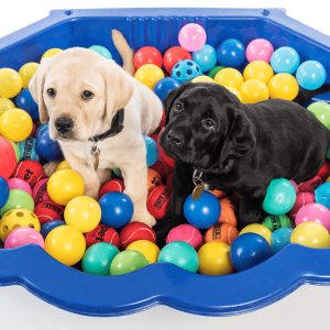 Gifts for Guide Dogs