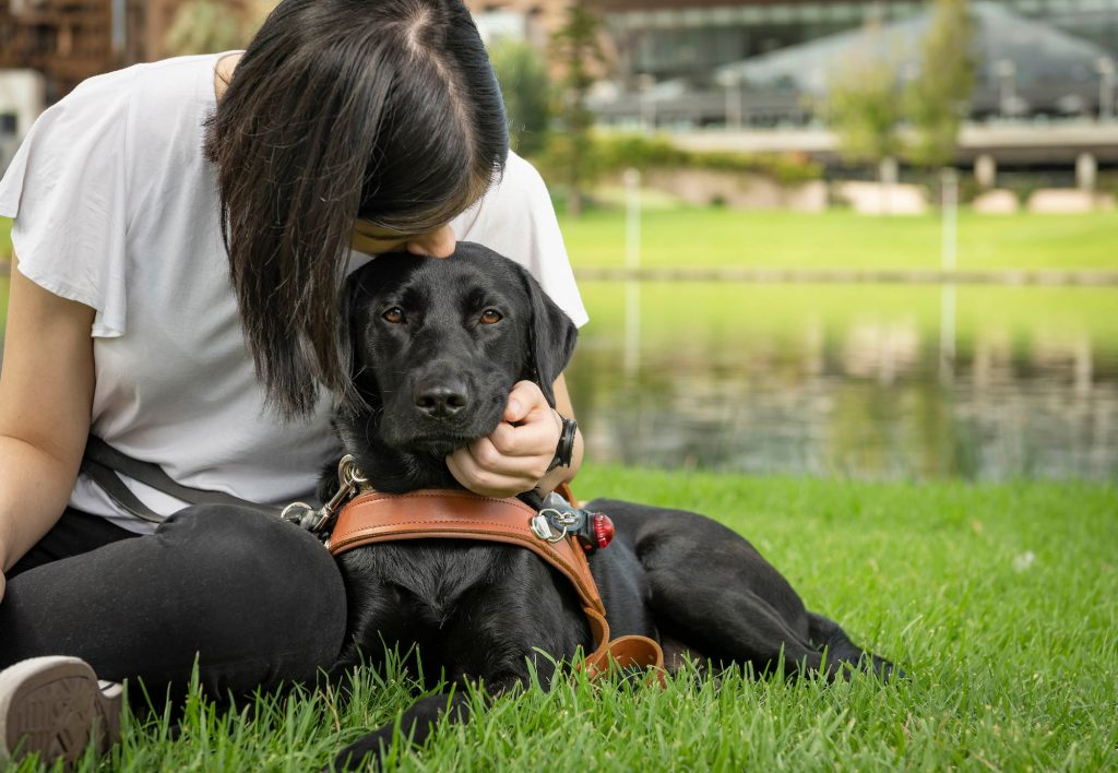 A Black Guide Dog in harness laying on grass looking at the camera. A person is sitting next to the Guide Dog and is leaning over, kissing the Guide Dog on the head.
